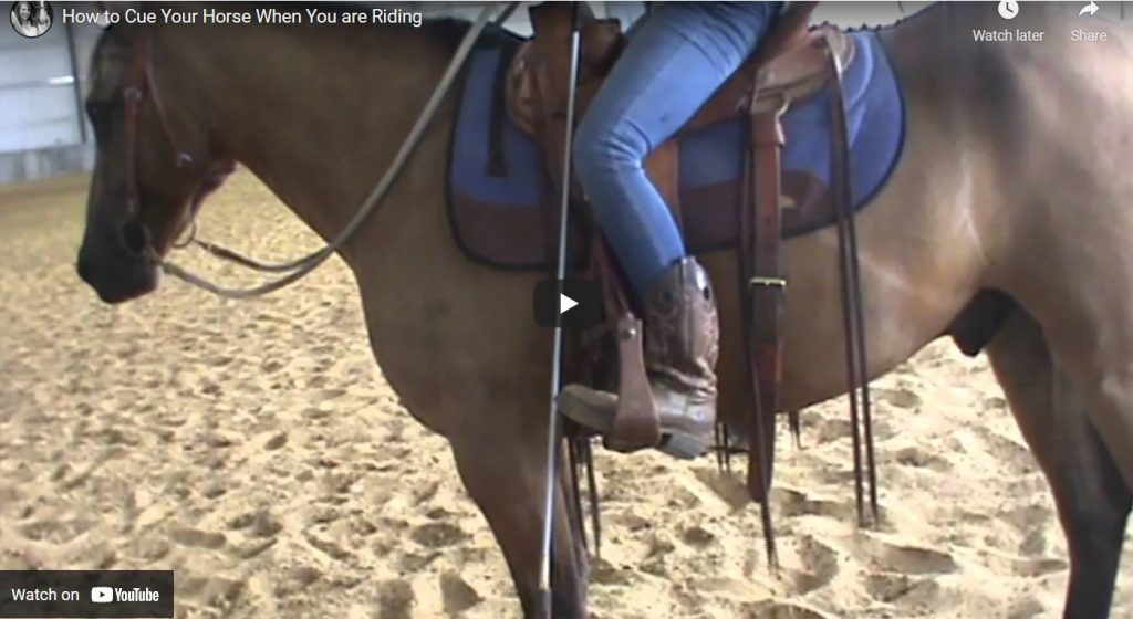 How to Cue your Horse When You are Riding